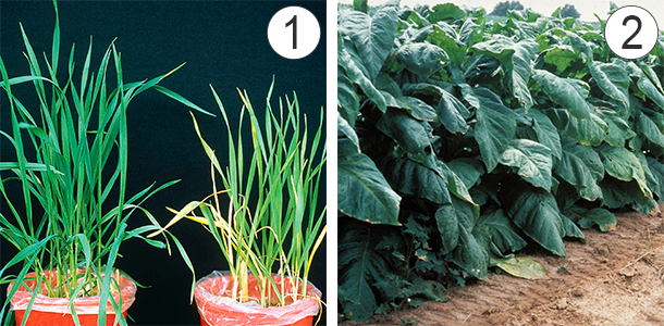 Азот - Нарушение содержания азота в растениях