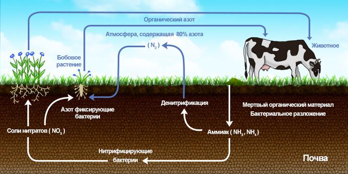 Азот - Круговорот азота в природе