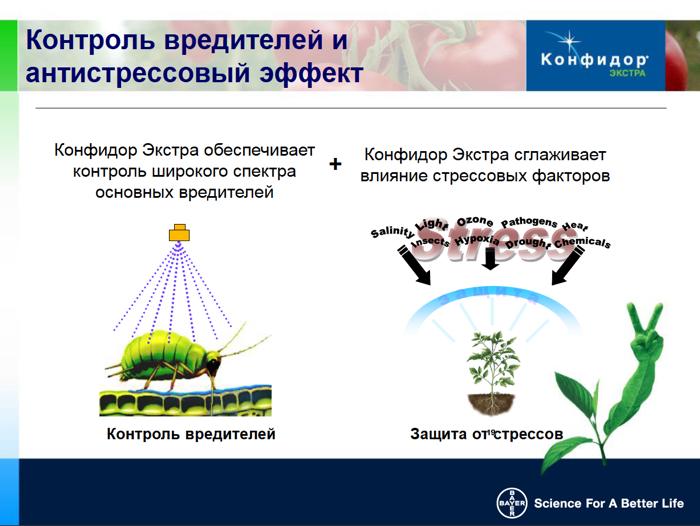Имидаклоприд - Механизм действия