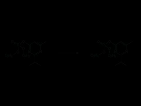 Диазинон - Окисление диазинона до диазоксона. В живых организмах диазинон переходит в соответствующий эфир фосфорной кислоты (диазоксон).