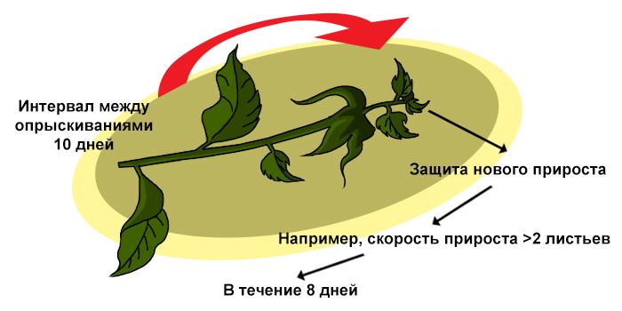 Трифлоксистробин (Зато) - Защита нового прироста благодаря эффекту</p> мезостемного перераспределения