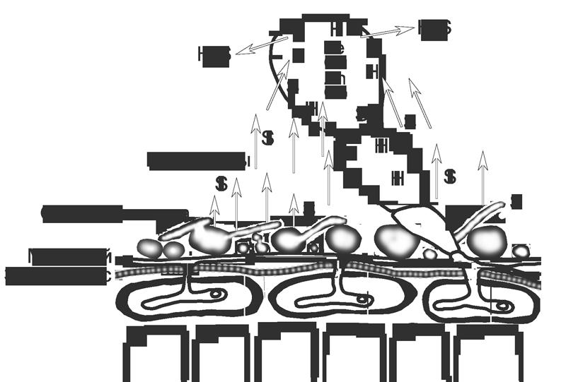 Сера - Механизм действия серного фунгицида (тиовита) </p>на возбудителя мучнистой росы