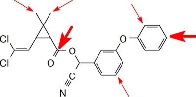 Циперметрин - Направления атаки ферментов