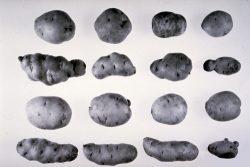 Перечень карантинных объектов - Возбудители болезней растений</p> вирусные и вироидные