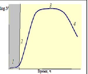 Лаг-фаза - Лаг-фаза на кривой роста бактериальной популяции