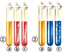 Гидролазы - Выявления гликозидаз с помощью сред Гисса