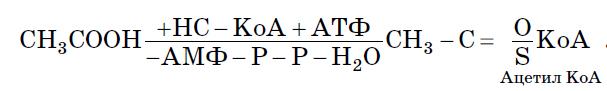 Лигазы - Схема реакции синтеза амида аспарагина из аспарагиновой кислоты и аммиака