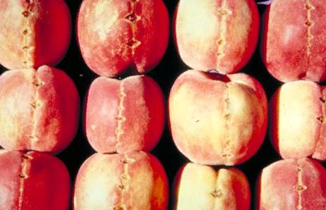 Репликация вироидов - Вироид <i>Peach latent mosaic viroid</i>