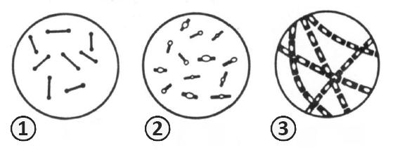 Палочковидные бактерии - Палочковидные бактерии