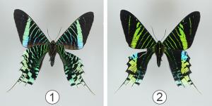 Окраска насекомых - Структурная или физическая окраска