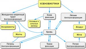 Детоксикация - Выведение ядов из организма