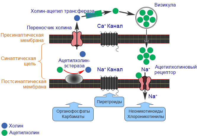 Механизм действия - Механизмы действия пестицидов различных групп