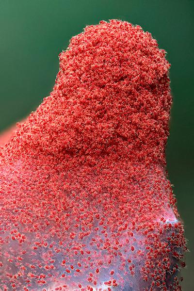 Акарицид - Клещи – объекты действия акарицидов