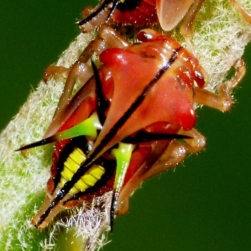 Кожа насекомых. Производные кожи - Кожа – носительница пигментов