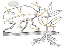 Инсектицид -  Пути проникновения пестицидов в организм вредителя
