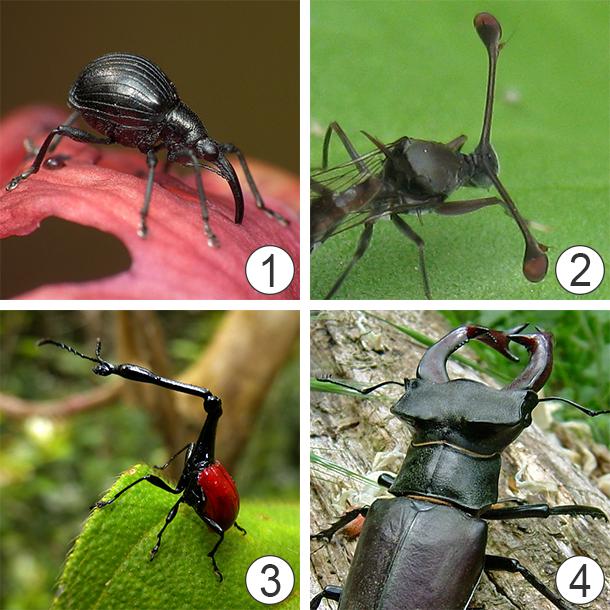Голова насекомого - Видоизменения формы головы