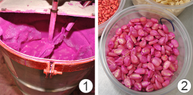 Обработка семенного материала (протравливание семян) - Обработка семян