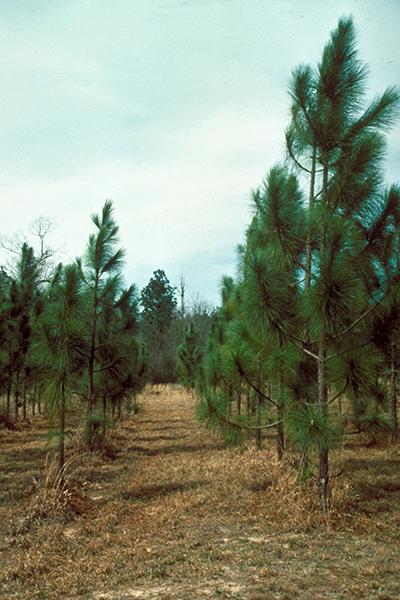 Защитный пестицид - Беномил – защитное действие