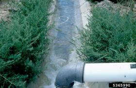 Фертигация - Развитие корневой системы растения: