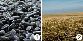 Внесение удобрений (способы) - Вынос питательных элементов</p> (на примере подсолнечника)