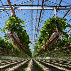 Внесение удобрений (способы) - Гидропоника (выращивание клубники без почвы)
