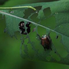 Кишечный пестицид - Кишечные пестициды поступают</p> в организм вредителя при питании