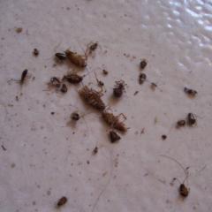 Дустирование (опыливание) - Пестицид от тараканов в виде дуста, </p>результат действия