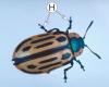 Ноги насекомых - Ходильные ноги
