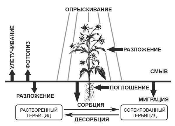 Гербицид - Процессы, происходящие с гербицидами