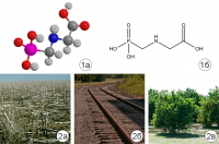 Гербицид сплошного действия - Глифосат – гербицид сплошного действия