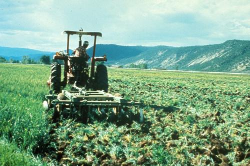 Удобрения - Запашка в почву сидератов