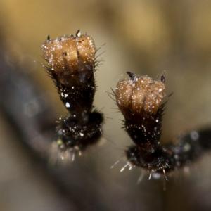 Органы чувств насекомых - Лапки - место расположения </p>органа вкуса у мухи