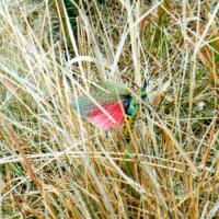 Поведение насекомых - Расправление крыльев у саранчи – </p>рефлекс, возникающий при потере опоры