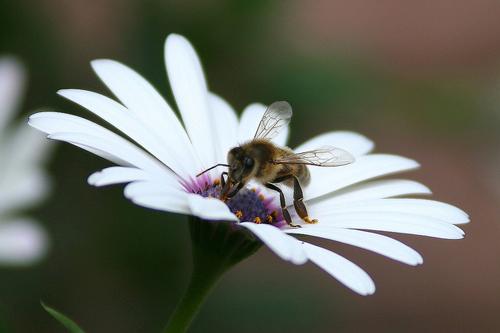 Поведение насекомых - Пчелы и другие общественные насекомые</p> способны к обучению