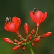 Поведение общественных насекомых - Пример общественной деятельности:</p> пчелы собирают нектар