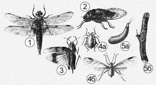Вредители - Взрослые формы насекомых