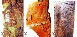 Усачи (дровосеки) - Повреждение древесины личинками