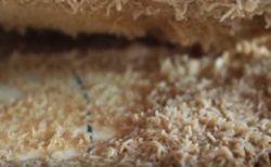 Пиофилиды - Сыр Casu Marzu