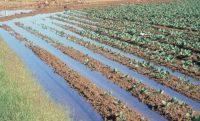Нитратные удобрения (Селитры) - Внесение при поливе
