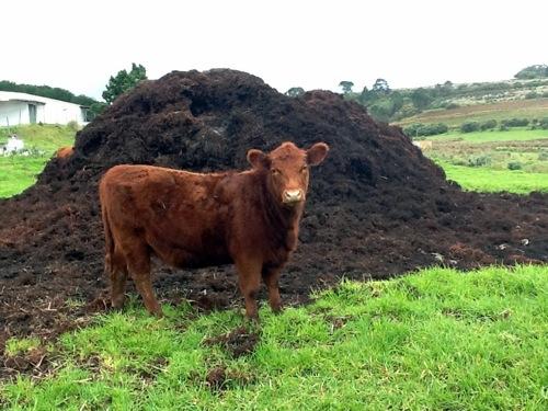 Органические удобрения - Навоз
