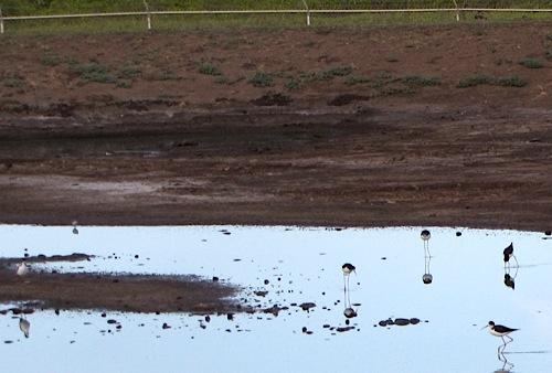 Органические удобрения - Осадки сточных вод