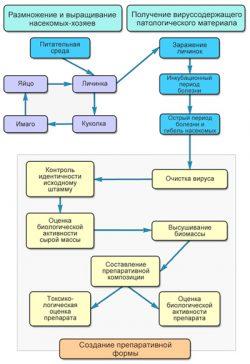 Вирусы насекомых - Технологические этапы производства </p>биологических препаратов на основе вирусов