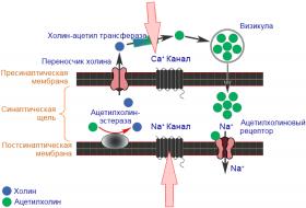 Пиретроиды - Механизм действия пиретроидов