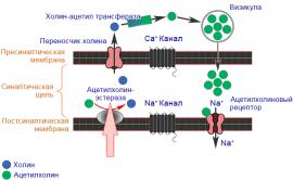 Карбаматы - Механизм действия инсектицидных карбаматов