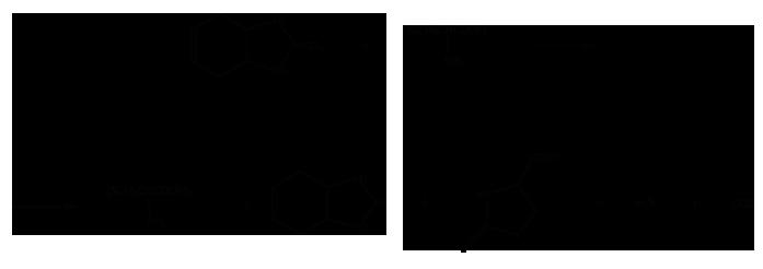 Фталимиды (производные фталевой кислоты) - Реакция каптана с сульфигидрильными </p>группами белков
