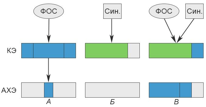 Синергисты - Схема действия ФОС и их</p> синергистов на резистентных особей