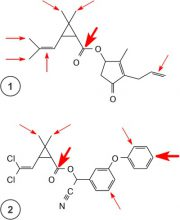 Пиретроиды - Атака ферментов на пиретроиды