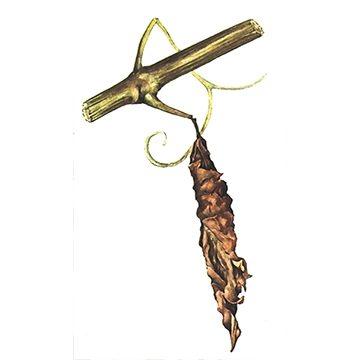 Трубковёрт виноградный (грушевый) - Лист винограда с личинкой. Использовано изображение: