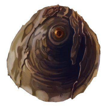 Щитовки - Щитовка ложнокалифорнийская