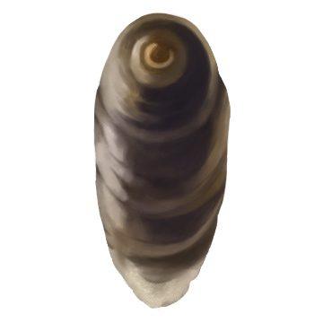 Щитовка ложнокалифорнийская - Самец. Использовано изображение: